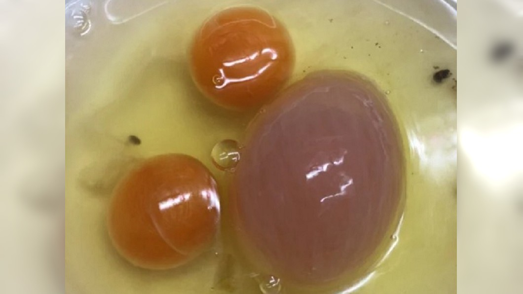 網友打蛋驚見超稀有「1大2小」3顆蛋黃。(圖/Dcard網友授權提供) 打蛋驚見「3顆蛋黃」含血紫色 內行神解原因:運氣很好