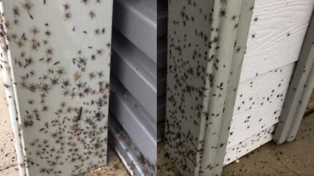 澳洲民眾拍下疑有數千隻蜘蛛在家外牆壁狂爬。(圖/翻攝自Melanie Williams臉書) 澳洲洪災太可怕!數千蜘蛛大軍狂竄、野蛇闖屋內避難