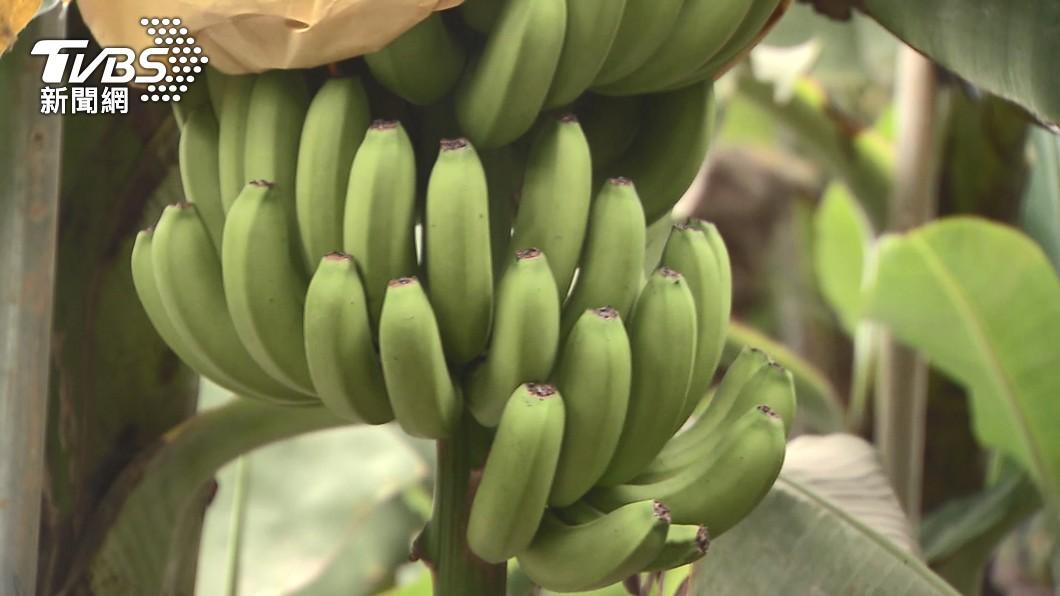 男子因偷竊香蕉被毆打綑綁身亡。(示意圖,與事件無關/TVBS) 「死豬結」綑綁偷蕉賊身亡 蕉農遭判3年批:不公平