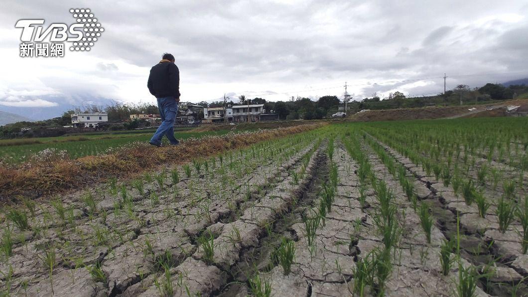 (圖/中央社) 防水情吃緊致農作減產 農委會26日說明河川水調度