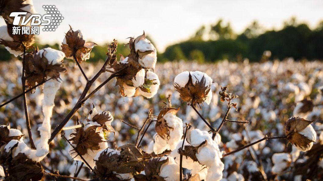 H&M因拒用新疆棉遭大陸消費者抵制,掀起一陣風暴。(圖/shutterstock達志影像) 新疆棉風暴 紐時:服飾商遭逼歐美大陸選邊站