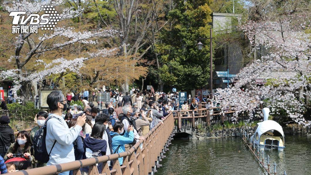 (圖/中央社) 東京「櫻吹雪」正浪漫 賞櫻景點湧入人潮