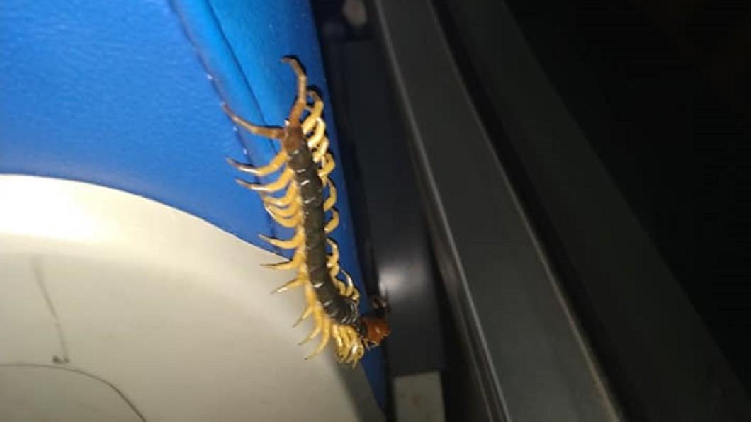 網友搭客運驚見巨大黑蜈蚣從椅背竄出。(圖/翻攝自爆廢1公社) 客運椅竄出「巨大黑蜈蚣」 驚悚畫面震撼網:頭皮發麻
