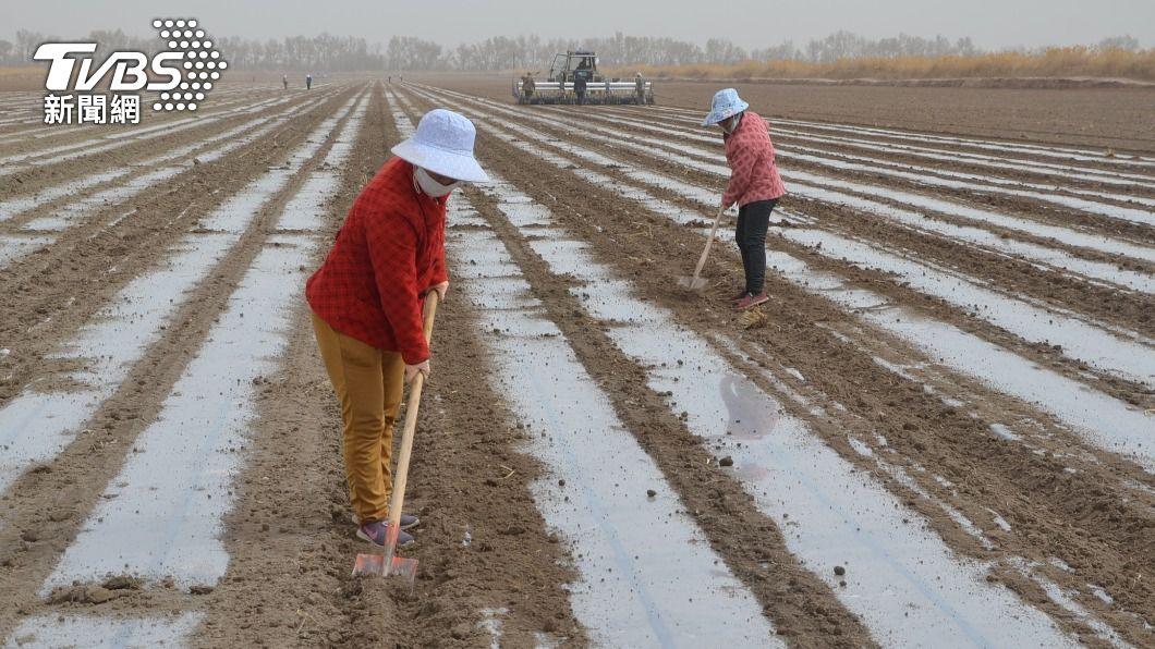 反擊封殺血棉花! 央視:受害的是維吾爾棉農