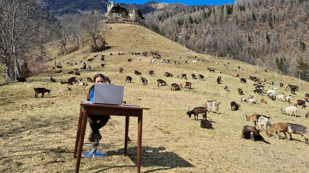 圖/達志影像路透 遠距教學 義女童山野上課 小羊、美景入鏡