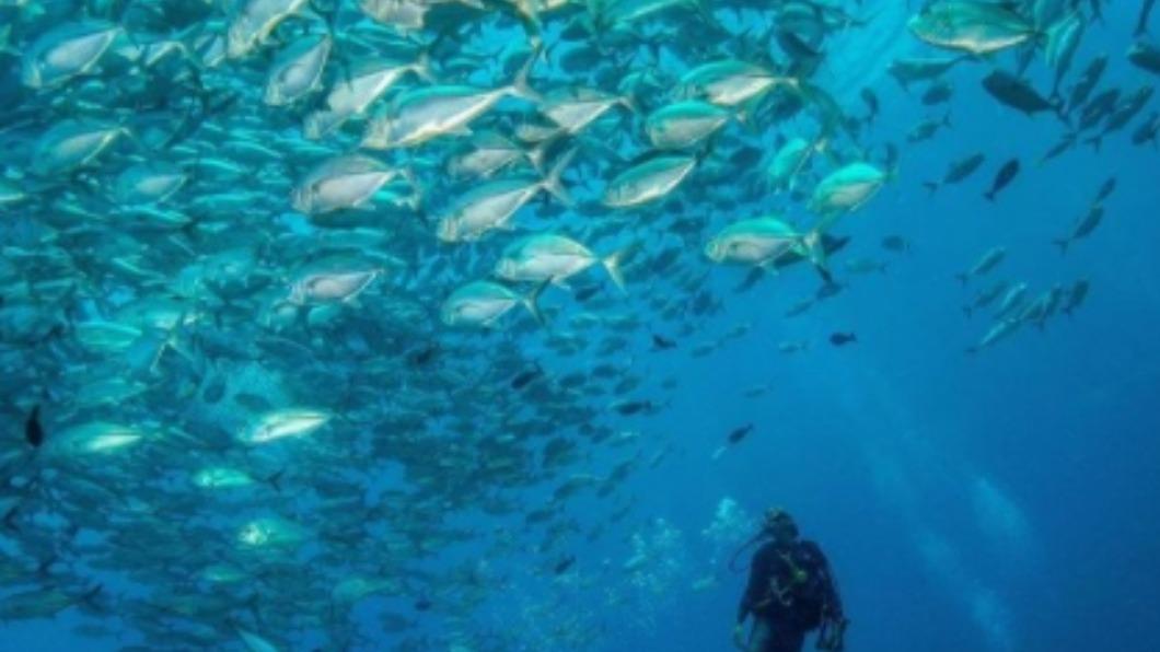 帛琉6大景點。(圖/翻攝自帛琉觀光局IG) 牛奶湖、水母湖潛水聖地 帛琉必訪6大景點