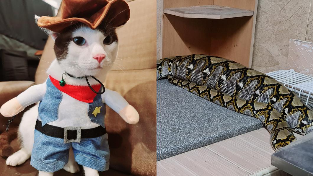泰國一隻寵物貓遭到闖入家中的巨型蟒蛇生吞。(圖/翻攝自Kanchi Nard臉書) 3.6米蟒蛇活吞愛貓 泰女童見「腹部形狀」崩潰