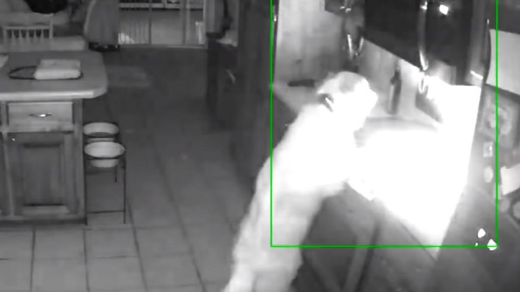 圖/翻攝自Inside Edition YouTube 黃金獵犬半夜肚子餓 貪吃亂開瓦斯爐引大火
