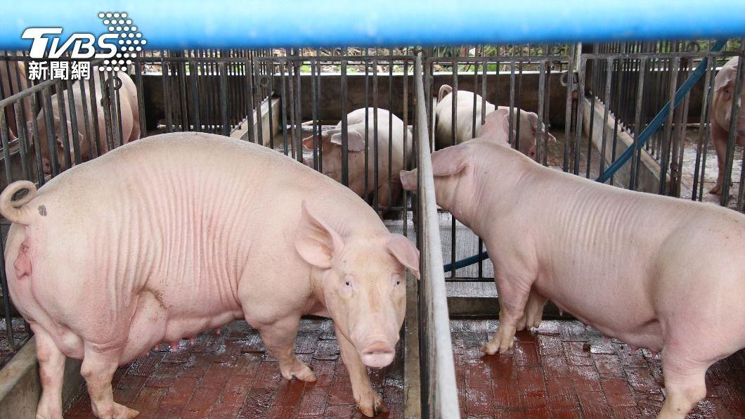 (圖/中央社) 防堵非洲豬瘟 農委會:查6400家養豬場均安全