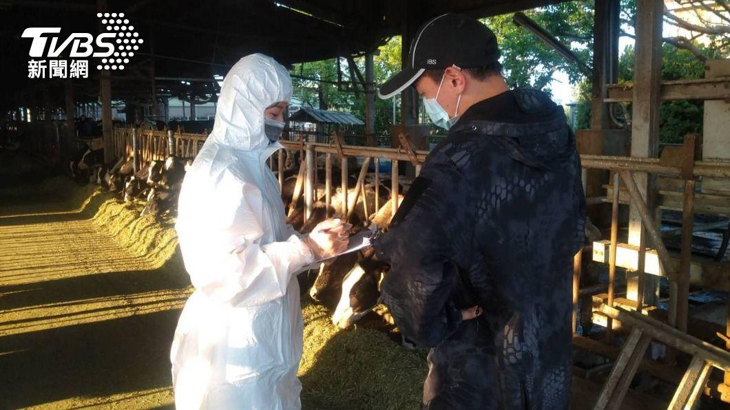 台南市動物防疫保護處16日成立牛結節疹緊急應變中心,全面調查牛隻健康情形。(圖/中央社) 防疫牛結節疹 台南成立緊急應變中心全面調查