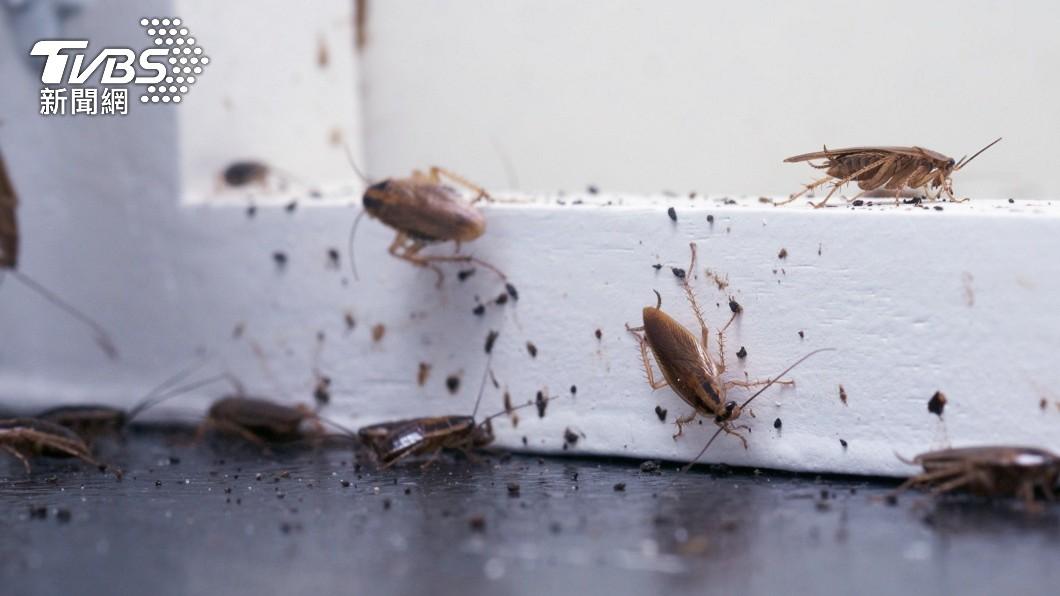 不少人看到蟑螂出沒常會害怕得驚聲尖叫。(示意圖/shutterstock 達志影像) 印女超怕蟑螂「看到就搬家」 3年換18屋夫崩潰休妻