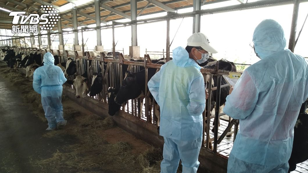 防疫人員巡查牧場。(圖/中央社) 牛結節疹疫苗28日打完18萬劑 疫情僅2週完全掌控