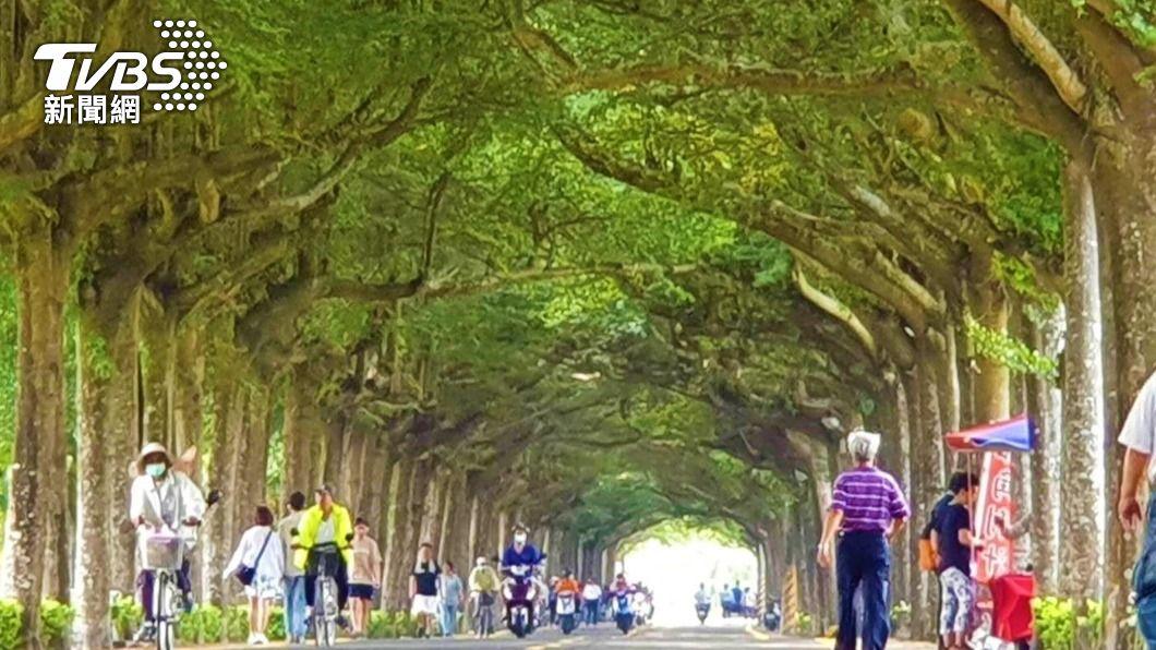 潮州綠色隧道成熱門打卡景點。(圖/中央社) 潮州民眾放鬆好去處! 泗林綠色隧道成打卡熱點