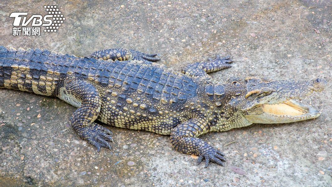 小孩自己網購,居然來一條泰國鱷。(示意圖/shutterstock達志影像) 騙很大?陸孩網購小魚 開箱一看竟是「兇猛泰國鱷」