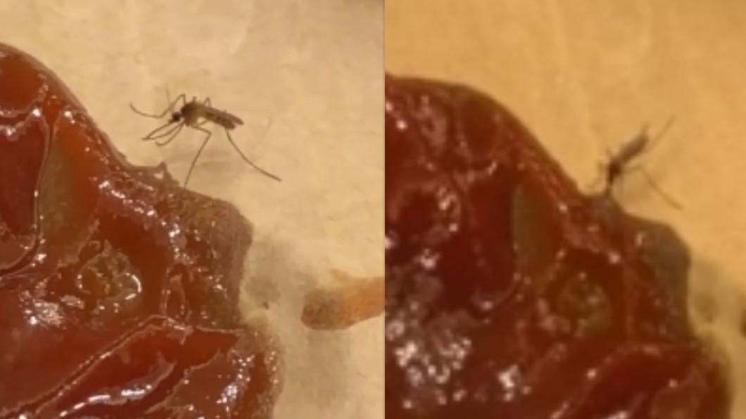 蚊子用力吸著番茄醬。(圖/翻攝自「路上觀察學院」) 誤把番茄醬當人血「埋頭苦吸」 網笑:是台南蚊!