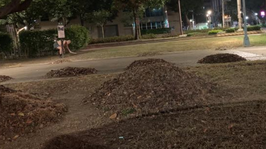 台北市一名老先生清晨上街掃落葉。(圖/翻攝自路上觀察學院) 凌晨台北街頭掃落葉 網見阿伯暖舉嚇:這樣很危險