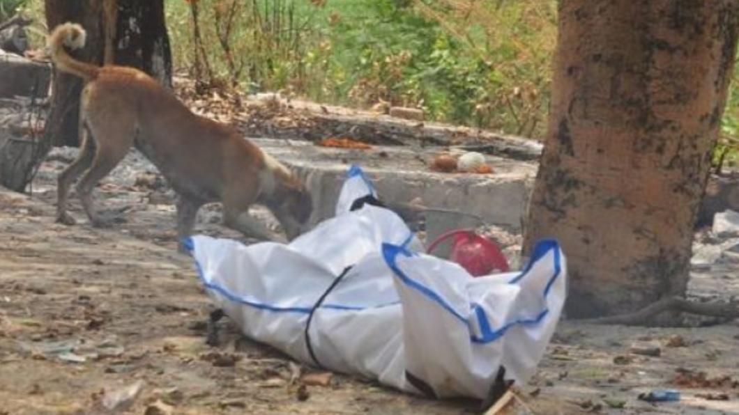 印度疫情崩潰「遺體淪食物」 遭狗啃臉剩一半