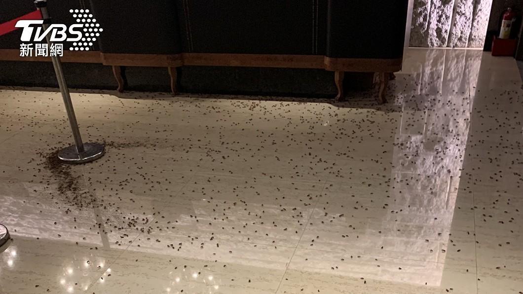 會場上遭2名年輕人闖入並朝櫃台砸了上千隻蟑螂。(圖/議員王欣儀提供) 陳嘉昌出席北市義警餐敘 2年輕人闖入砸上千隻蟑螂