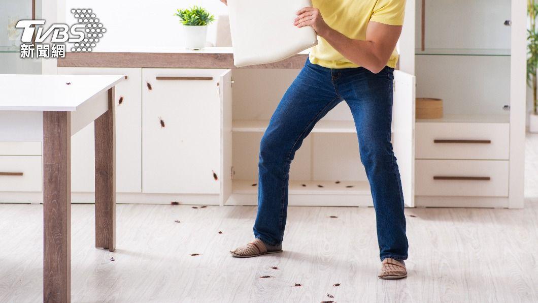 如何滅蟑成為網友熱議話題。(示意圖/Shutterstock達志影像) 滅蟑神獸現身!飛天蟑螂「難逃蛙口」 虐爆活吞畫面曝
