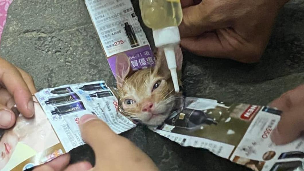 嘉義布袋民眾通報貓咪卡石縫。(圖/家畜所提供) 小貓咪貪玩頭卡石縫 潤滑油推擠40分終脫困