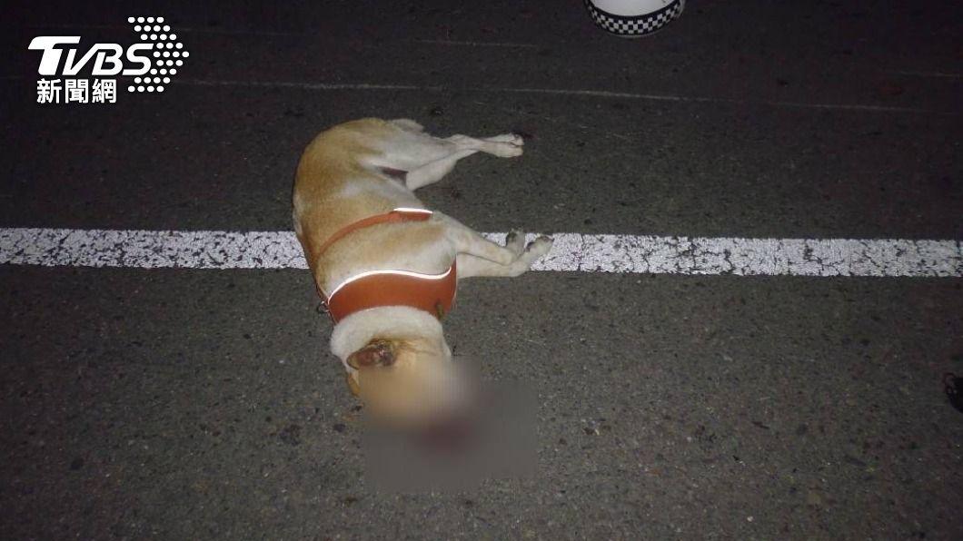 追撞意外讓狗狗吐血身亡。(圖/TVBS) 機車追撞腳踏車 無辜小狗當場吐血亡