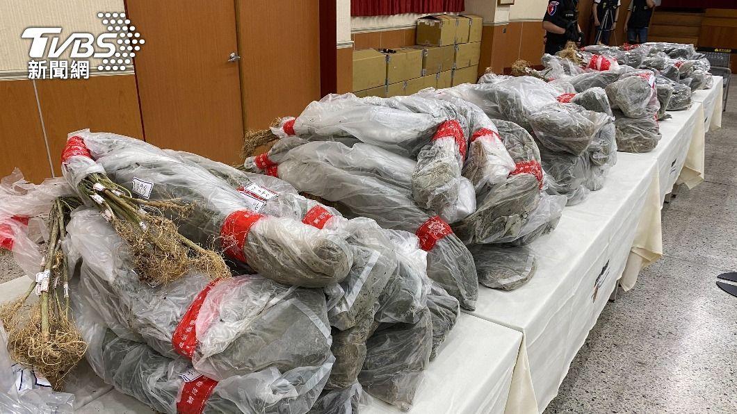 (圖/中央社) 竹市警跟監2個月破大麻工廠 查扣市值5億成品活株