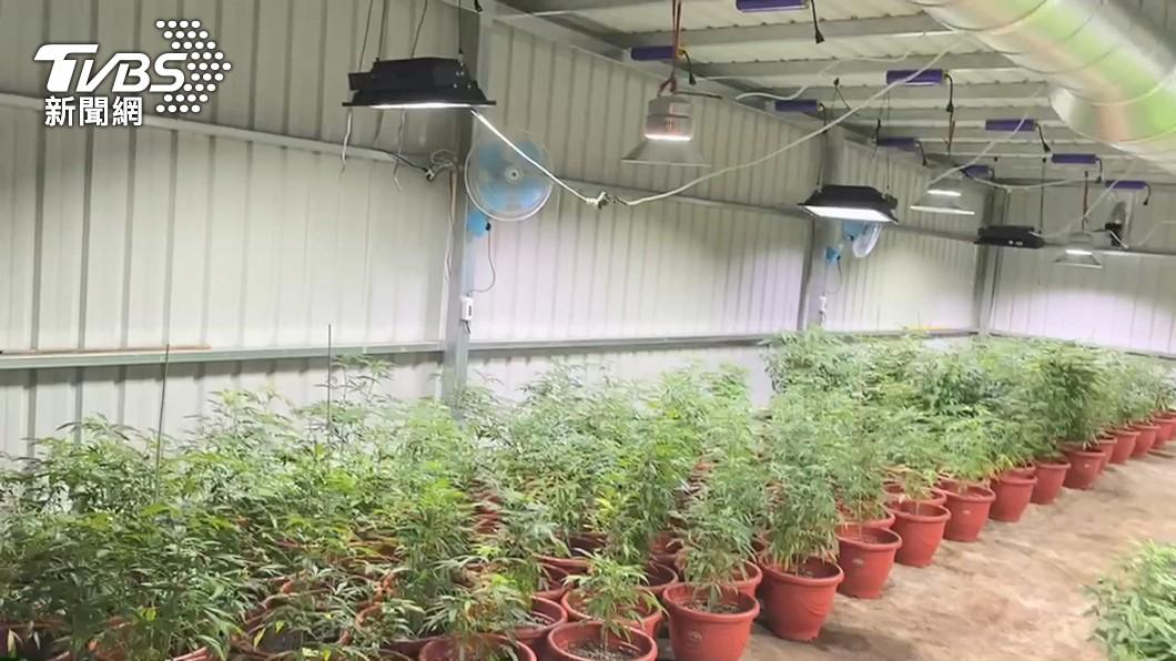 圖/TVBS 市值近5億元!新竹破企業化經營 「北台最大大麻工廠」