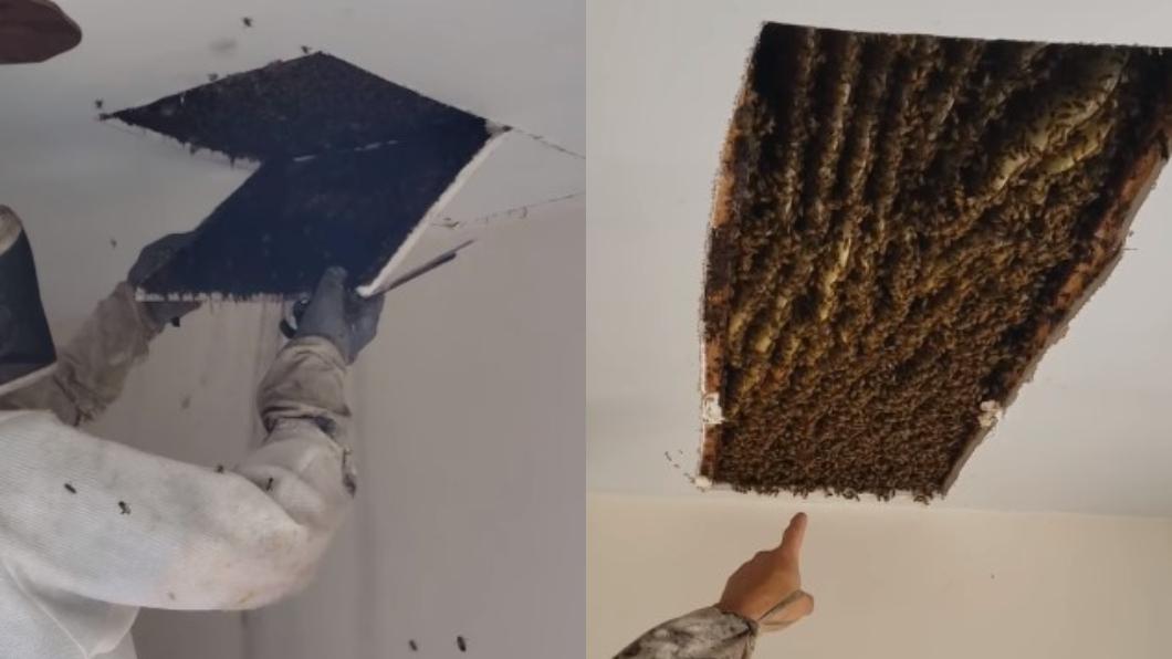 美國一名女子的家中經常有蜜蜂群築巢。(圖/翻攝自Lisa Stovall Ohrmundt臉書) 女王蜂是妳?才清除12萬蜜蜂群 10萬隻又闖家裡築巢