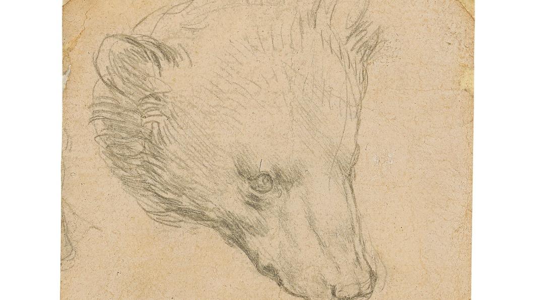 《熊之頭》將在7月進行拍賣,估計能以1200萬英鎊(約4.6億新台幣)拍出。(圖/翻攝自推特@ChristiesInc) 當年僅96元 達文西這張素描畫現喊價新台幣4.6億!