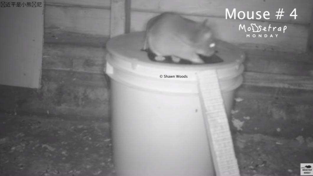美網紅伍茲為了抗議並防止影片被盜,在他上傳的影片左上角附浮水印,譏習近平是小熊維尼。(圖/翻攝自Shawn Woods YouTube) 美網紅反擊盜用捕鼠器開箱片 諷習近平是小熊維尼