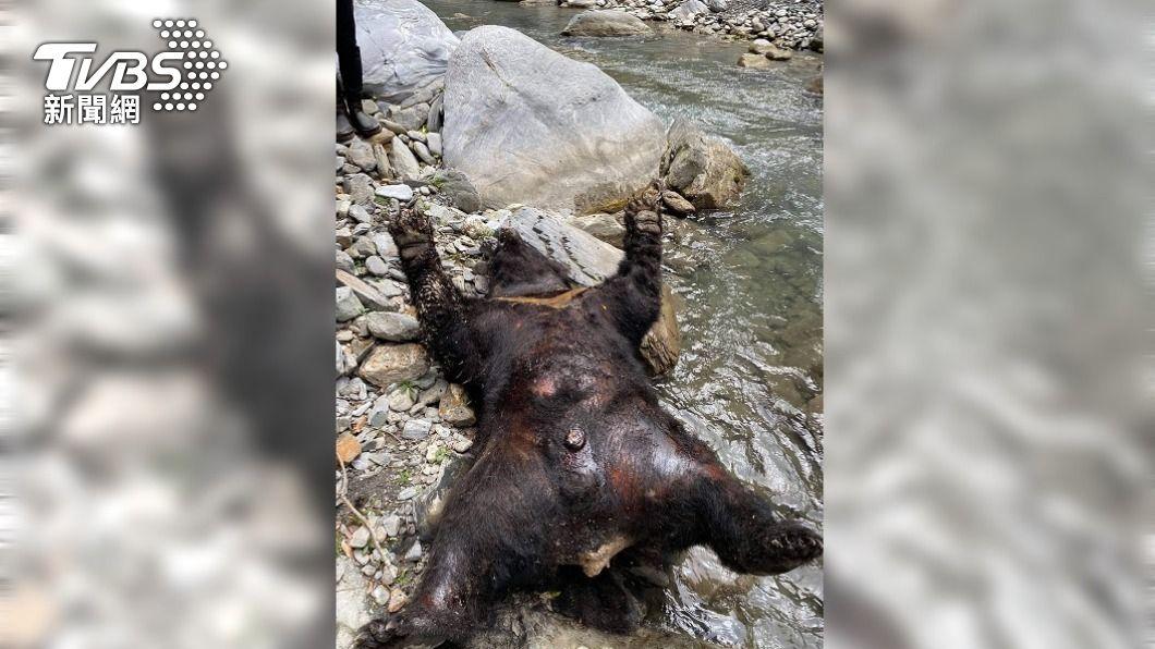 拉庫拉庫溪上游發現1頭台灣黑熊屍體。(圖/中央社) 台灣黑熊陳屍深山溪邊 花蓮林管處派員調查
