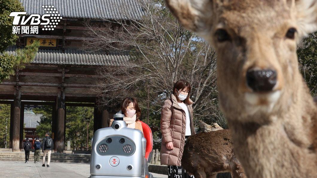 (示意圖/達志影像美聯社) 日本奈良鹿殘忍殺害事件 檢察官求處嫌犯10月有期徒刑