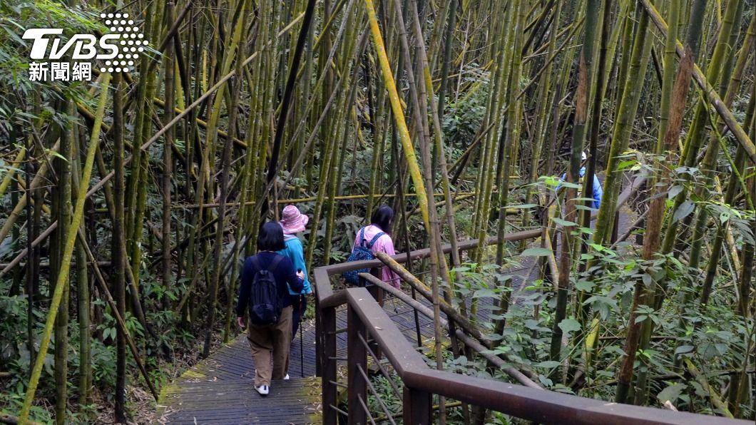圖為遊客走訪阿里山地區迷糊步道。(圖/中央社) 遊客沒戴口罩 阿里山原住民不滿要求封閉景點