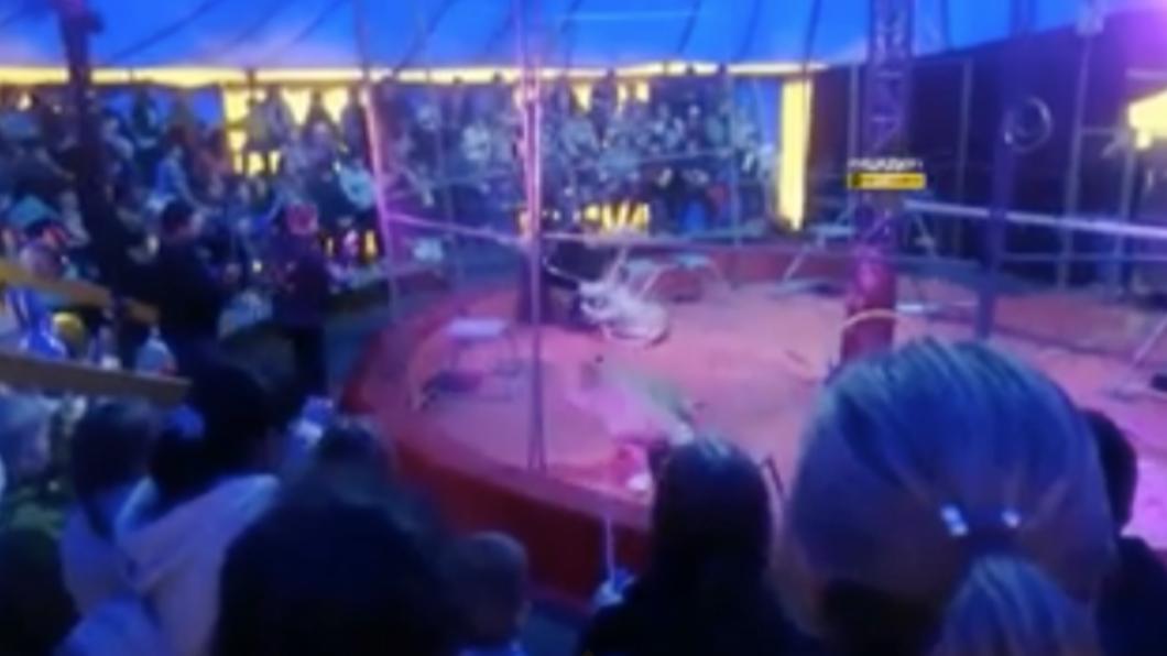 母獅突然抓狂攻擊馴獸師。(圖/翻攝自Daily Star) 母獅抓狂狠咬「拖走馴獸師」 觀眾嚇到癲癇發作