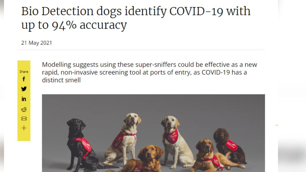 英國倫敦大學研究指出,即使患者無症狀,狗狗也能經訓練偵測出 94.3 %的新冠肺炎患者。(圖/取自倫敦大學衛生暨熱帶醫學院網頁lshtm.ac.uk) 狗能嗅出94%新冠肺炎染疫者 無症狀也難不倒牠