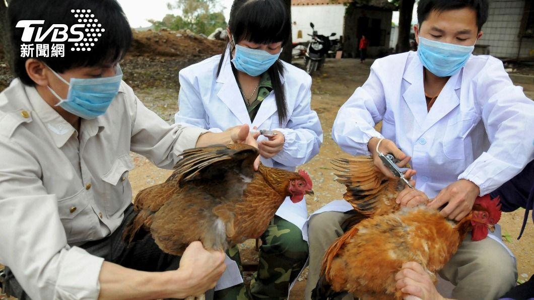 醫事人員為鳥禽類注射疫苗,降低感染風險。(圖/達志影像路透社) 全球首起!大陸H10N3禽傳人 專家:偶發事件風險低