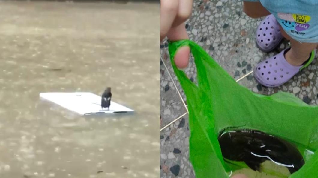 台北市大淹水,連動物也遭殃。(圖/翻攝自網路、TVBS) 忠孝東路抓鯰魚!北市淹水慘兮兮「老鼠抓浮板求救」