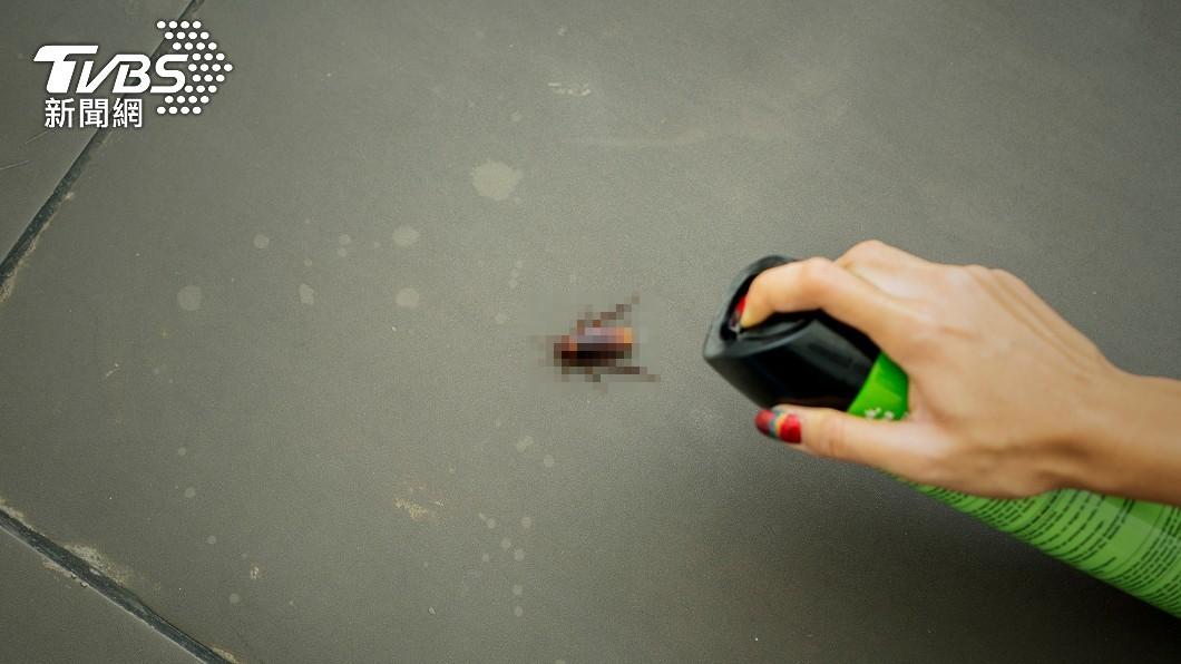 許多人看到蟑螂出沒常會嚇得花容失色。(示意圖/shutterstock達志影像) 尖叫引蟑螂「飛進嘴巴」?真相曝光 苦主曝超慘親身經歷