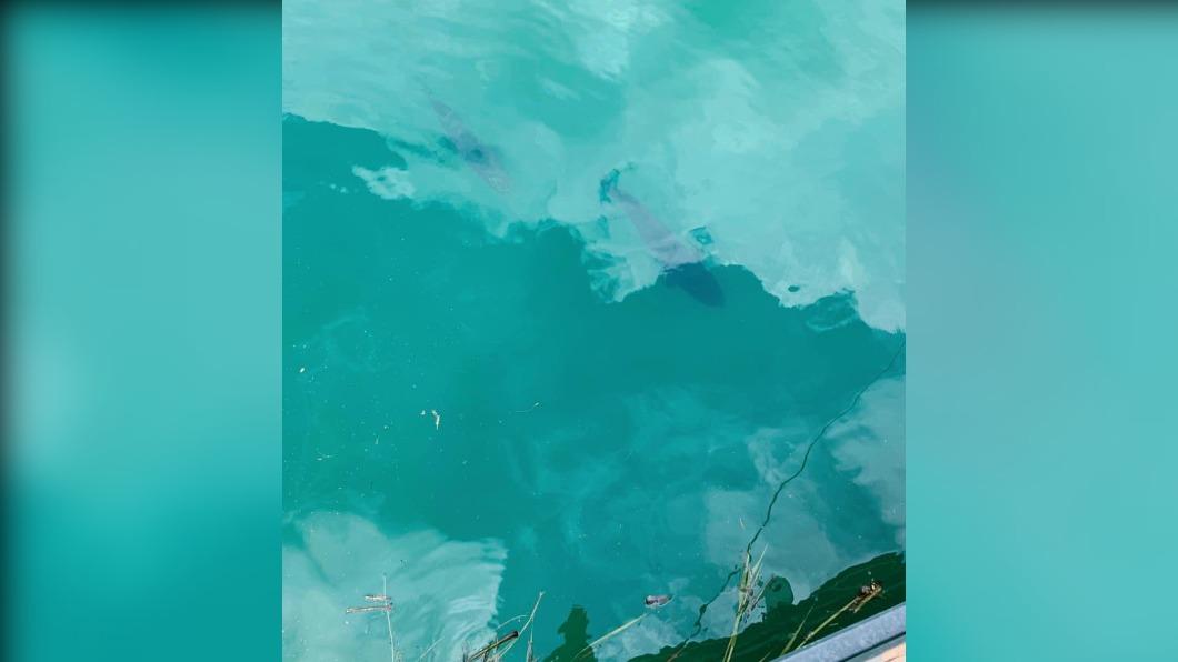 當地民眾發現日月潭魚虎又開始現蹤。(圖/翻攝自臉書日月潭一等高) 日月潭水位回升!九蛙全浸水 湖中「惡霸」魚虎橫行