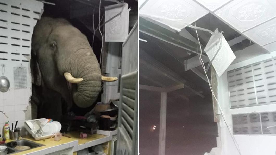 野象撞破民宅牆面覓食。(合成圖/翻攝自รัชฎาวรรณ ผึ้งประสพพร臉書) 象鼻破牆搜刮廚房 屋主對到眼崩潰喊:牠每天來!