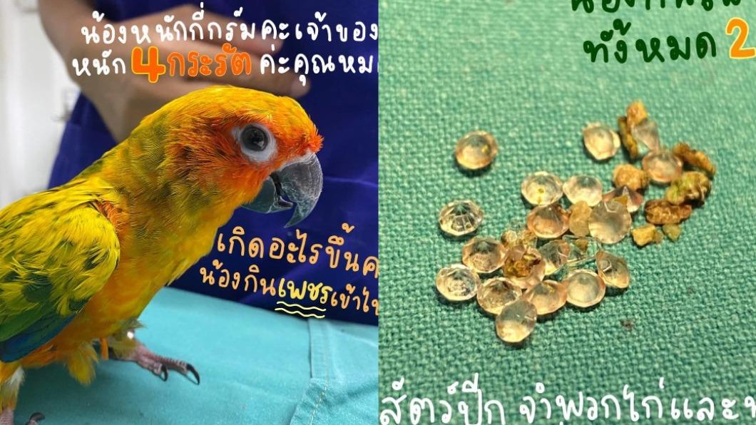 (合成圖/翻攝自โรงพยาบาลสัตว์แอนิมอลสเปซ Animal Space Hospital臉書) 最愛亮晶晶「吞21顆鑽石」 調皮鸚鵡被捉去開刀