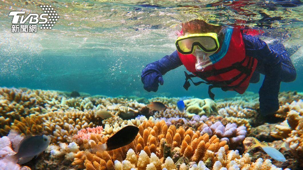 大堡礁的珊瑚復原狀況良好,但生態前景仍然黯淡。(示意圖/shutterstock達志影像) 澳洲大堡礁生態前景黯淡 恐列「瀕危」世界遺產
