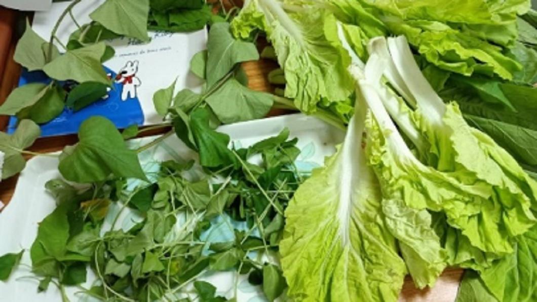 脫水中的小白菜、油菜、地瓜葉。(圖/嘉義大學食農產業及科普菁英教研中心提供) 【錯誤】網傳枯萎蔬菜泡神奇水竟能華麗變翠綠?