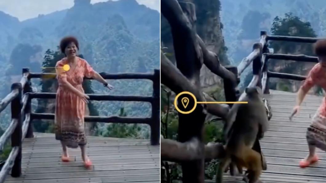 婦人跳舞後遭遇猴子搶走包包。(合成圖/翻攝自白鹿視頻微博) 嫌大媽歌舞太吵?猴子搶包包洩憤 遊客嚇到呱呱亂叫
