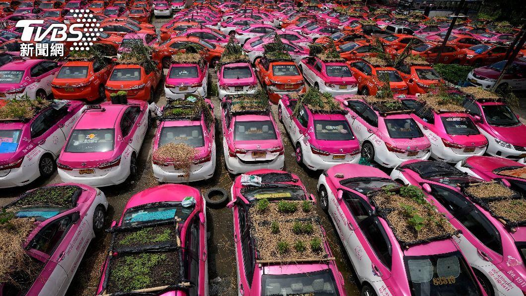 200多台「菜園車」一字排開超壯觀。(圖/AP) 疫情奇景!泰國小黃運將失業 突發奇想在車頂種菜養員工