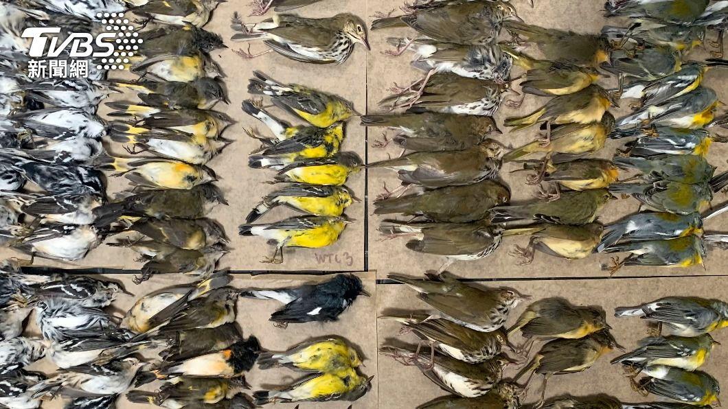 數百隻鳥類屍體掉落在紐約世貿大樓附近。(圖/AP) 慟!紐約世貿大樓遍地「鳥屍」 悲慘原因曝光
