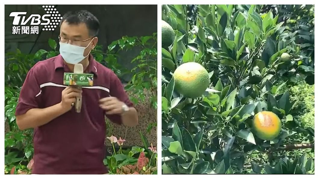 農委會主委陳吉仲曝下個可能就換柑橘。(合成圖/TVBS) 下個恐換柑橘?陳吉仲嗆陸:受傷的一定是「人口大國」