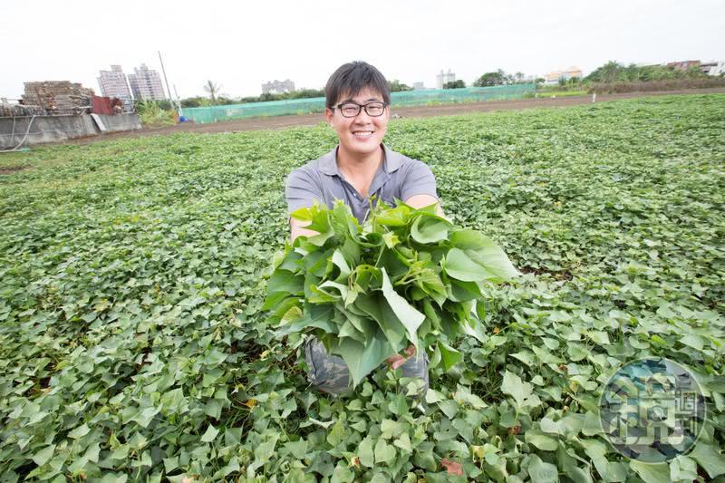 圖/鏡週刊 大學休學去種菜 27歲少年仔年收破百萬