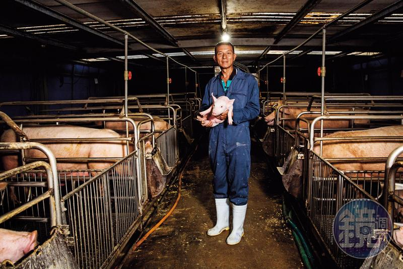圖/鏡週刊 22年前大淪陷!豬農為疫情自殺 全台蒸發1700億元