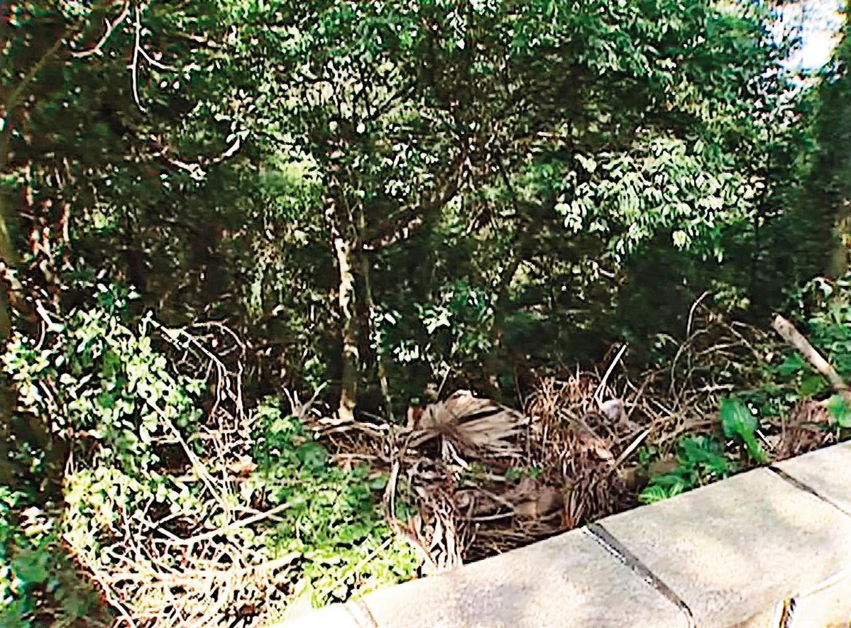徐志忠被登山客發現陳屍在外雙溪山區一處雜草叢中。(東森新聞提供)